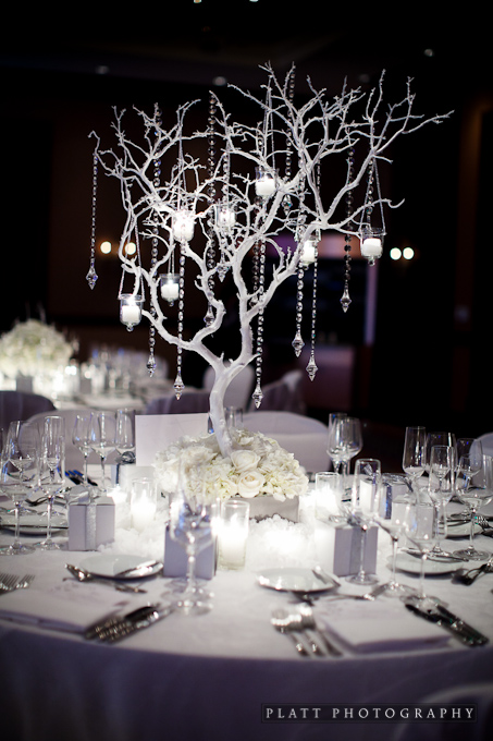 Winter trees on table tops at the Montelucia Resort in Scottsdale, Arizona